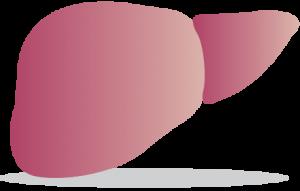 foie sain hepatite c
